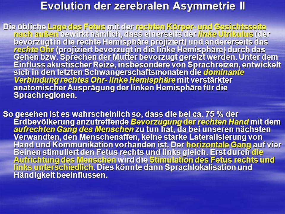 Evolution der zerebralen Asymmetrie II