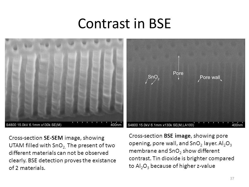 Contrast in BSE