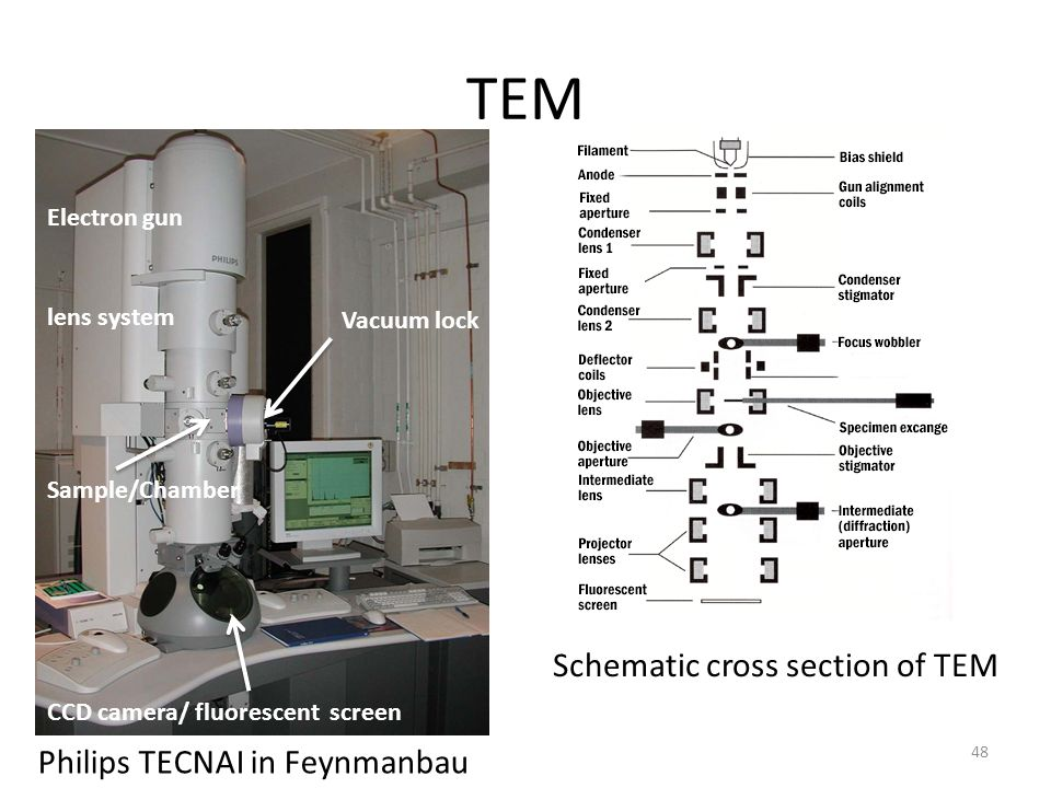 TEM Schematic cross section of TEM Philips TECNAI in Feynmanbau