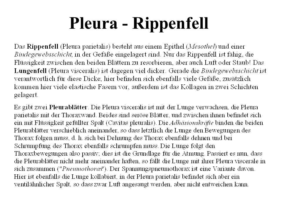 Pleura - Rippenfell