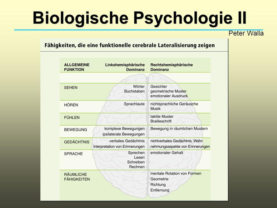 Biologische Psychologie II
