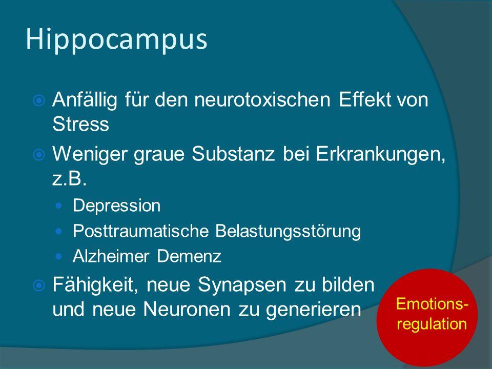 Hippocampus Anfällig für den neurotoxischen Effekt von Stress