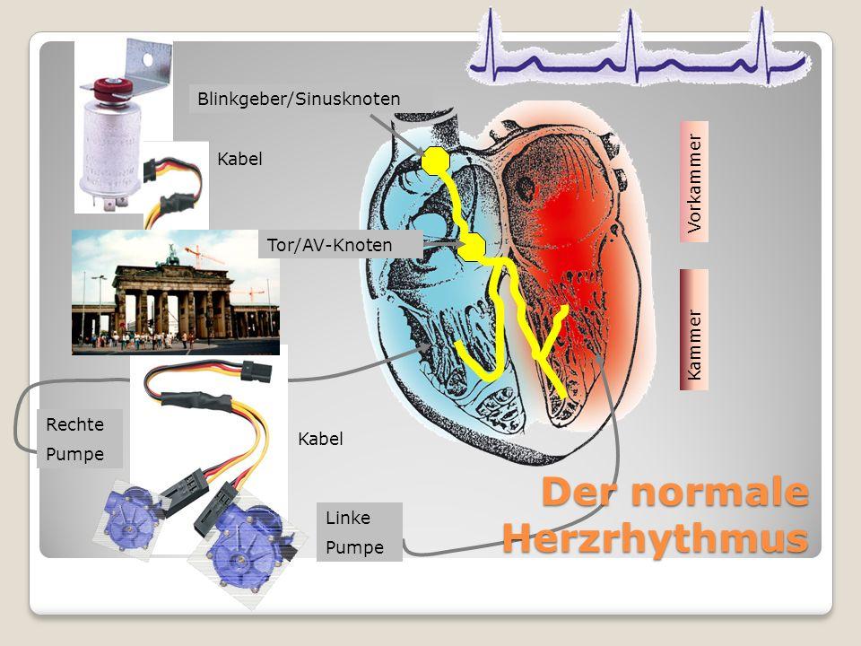 Der normale Herzrhythmus