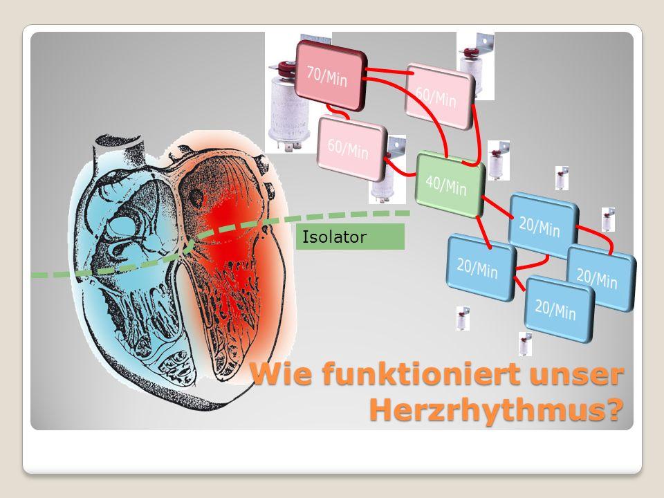 Wie funktioniert unser Herzrhythmus