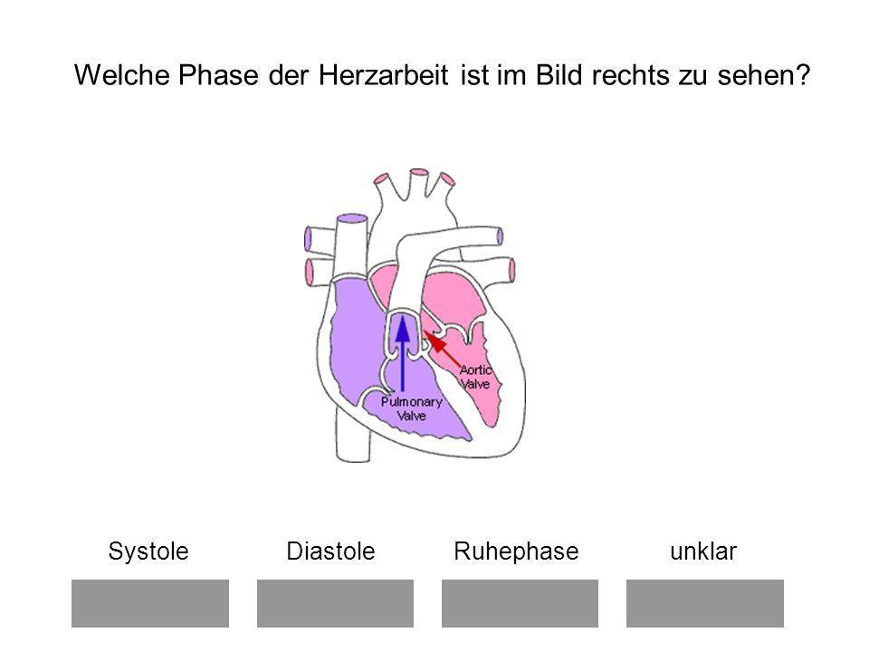 Welche Phase der Herzarbeit ist im Bild rechts zu sehen