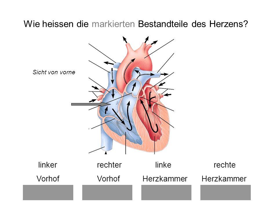 Charmant Linker Vorhof Des Herzens Ideen - Menschliche Anatomie ...