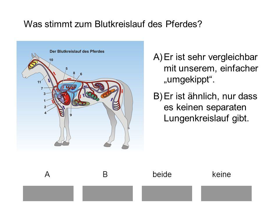 Was stimmt zum Blutkreislauf des Pferdes