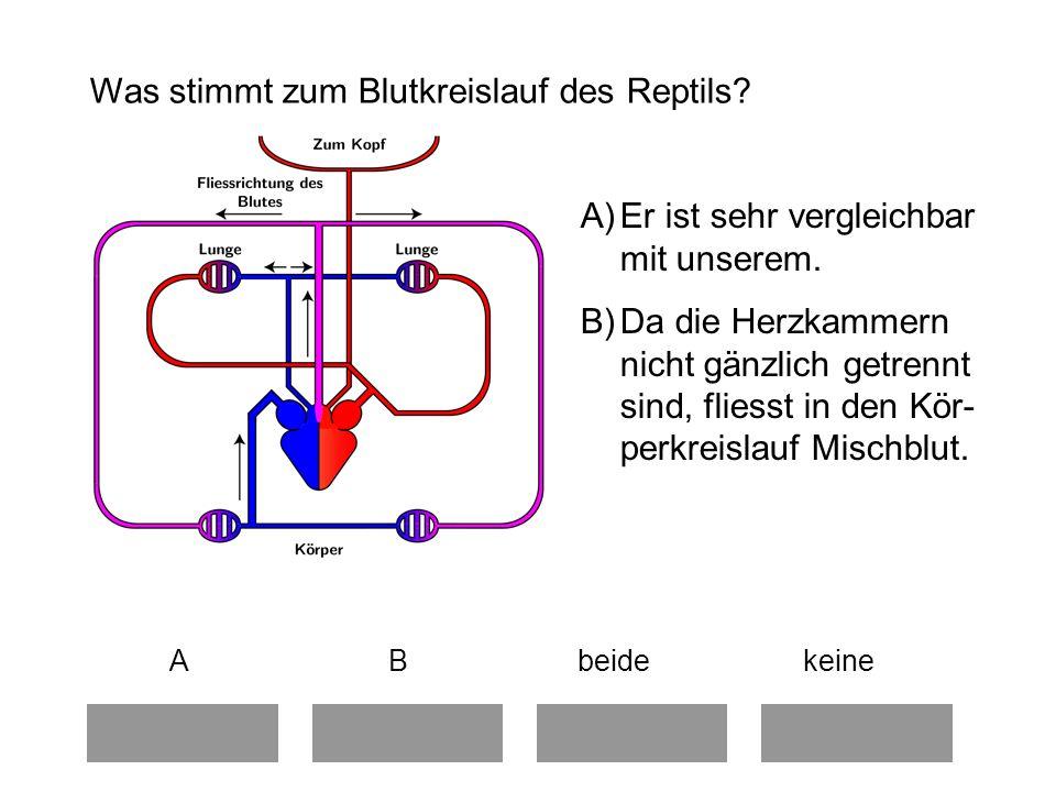 Was stimmt zum Blutkreislauf des Reptils