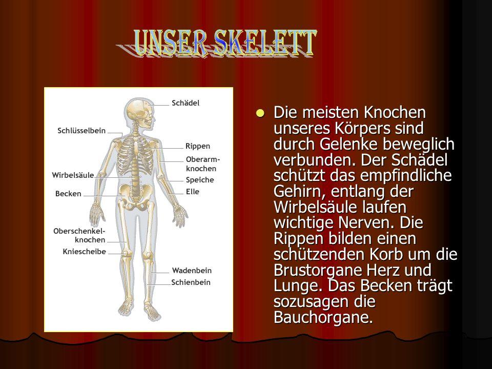 Unser Skelett