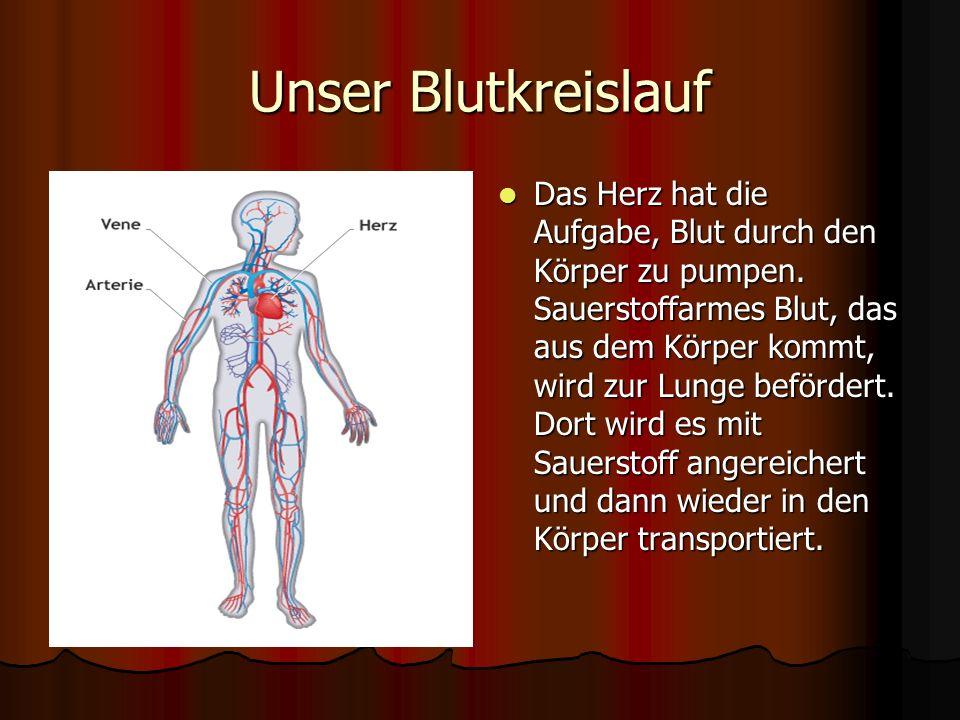 Unser Blutkreislauf