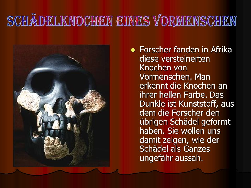 Schädelknochen eines Vormenschen