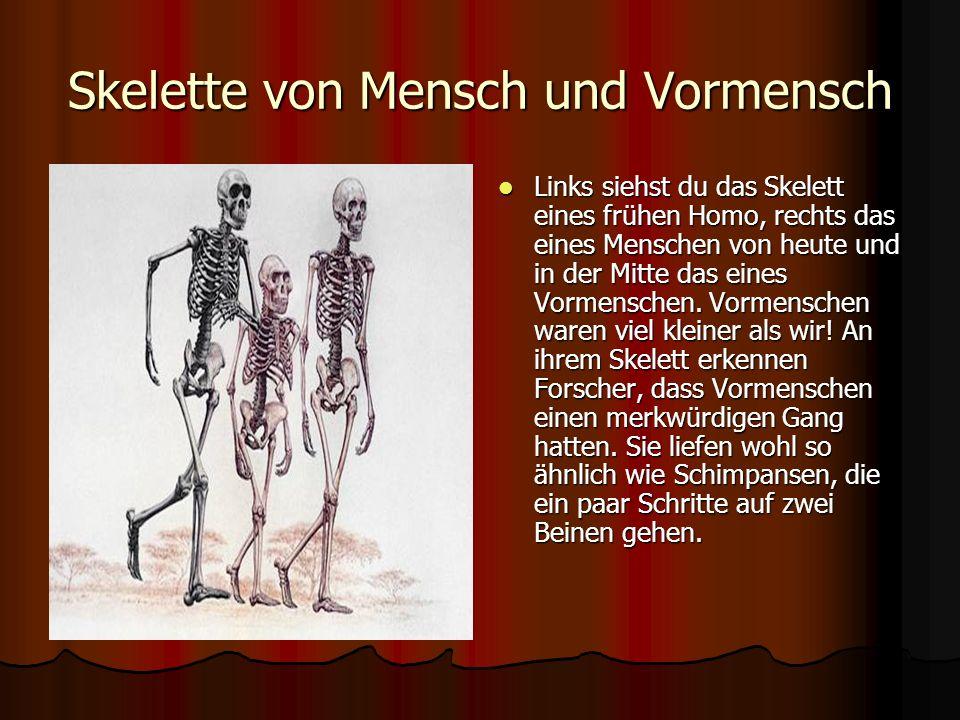 Skelette von Mensch und Vormensch