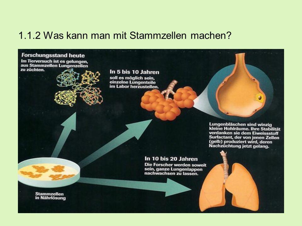 1.1.2 Was kann man mit Stammzellen machen