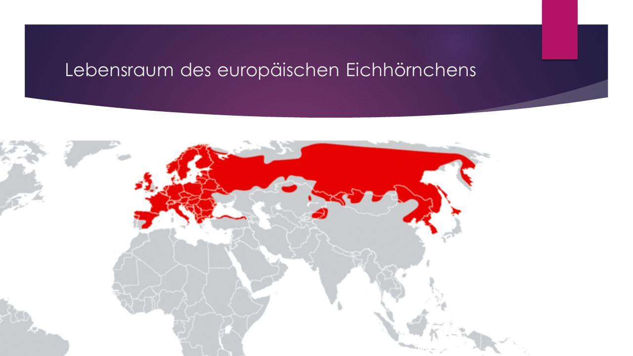 Lebensraum des europäischen Eichhörnchens