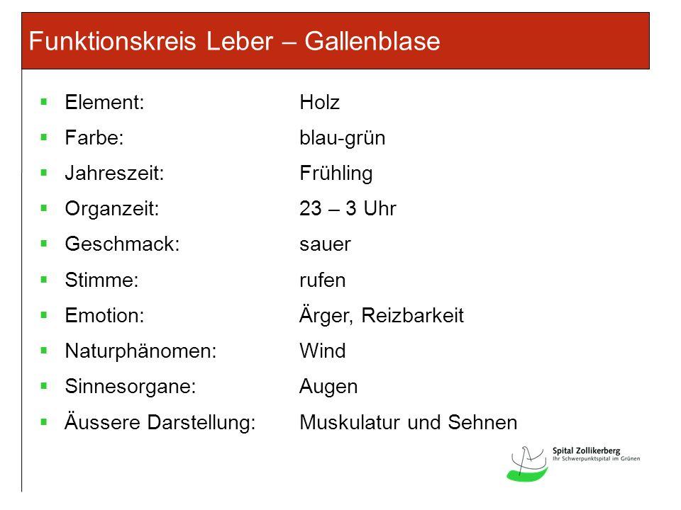 Funktionskreis Leber – Gallenblase