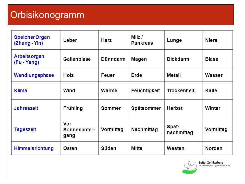 Orbisikonogramm Speicher Organ (Zhang - Yin) Leber Herz