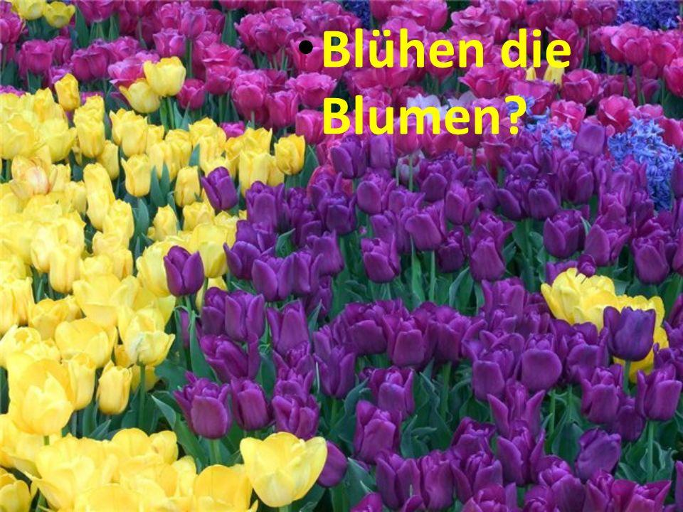 Blühen die Blumen