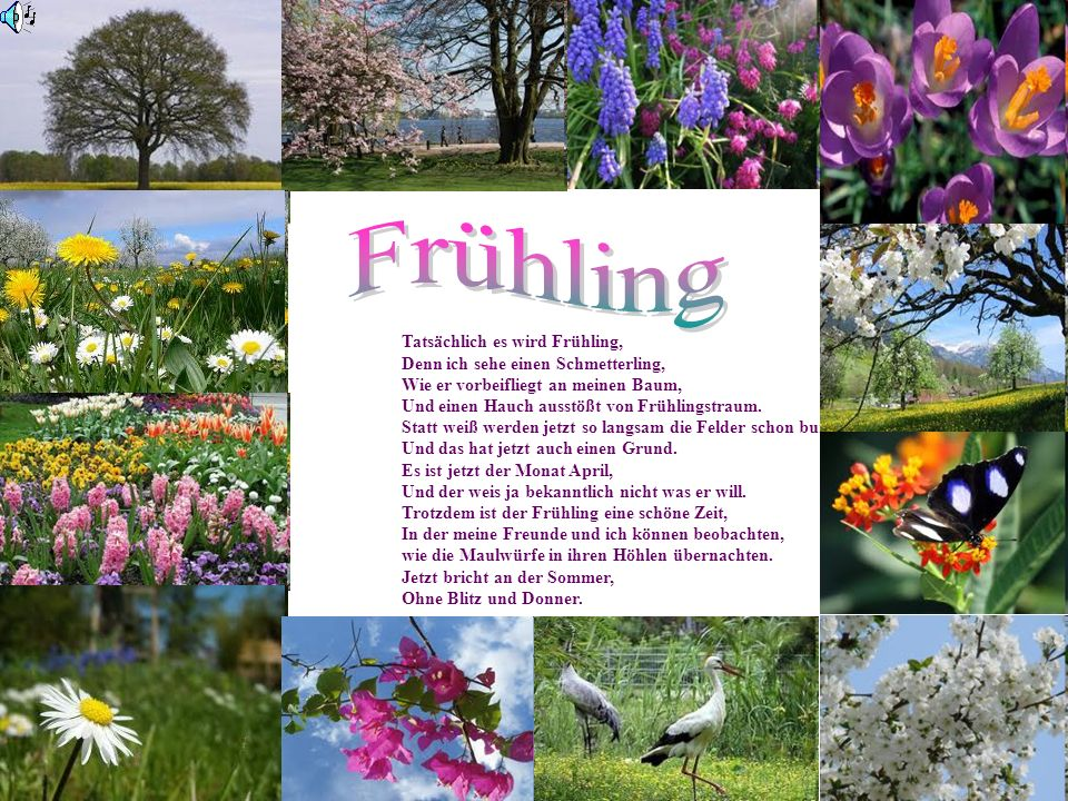 Frühling Tatsächlich es wird Frühling,