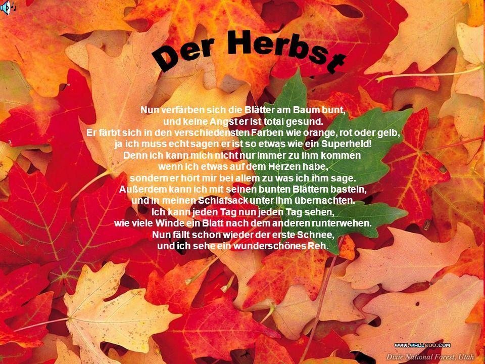Der Herbst Nun verfärben sich die Blätter am Baum bunt,