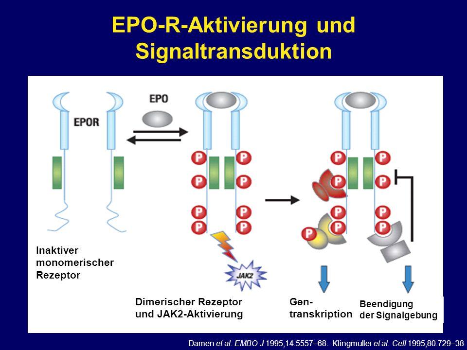 EPO-R-Aktivierung und Signaltransduktion