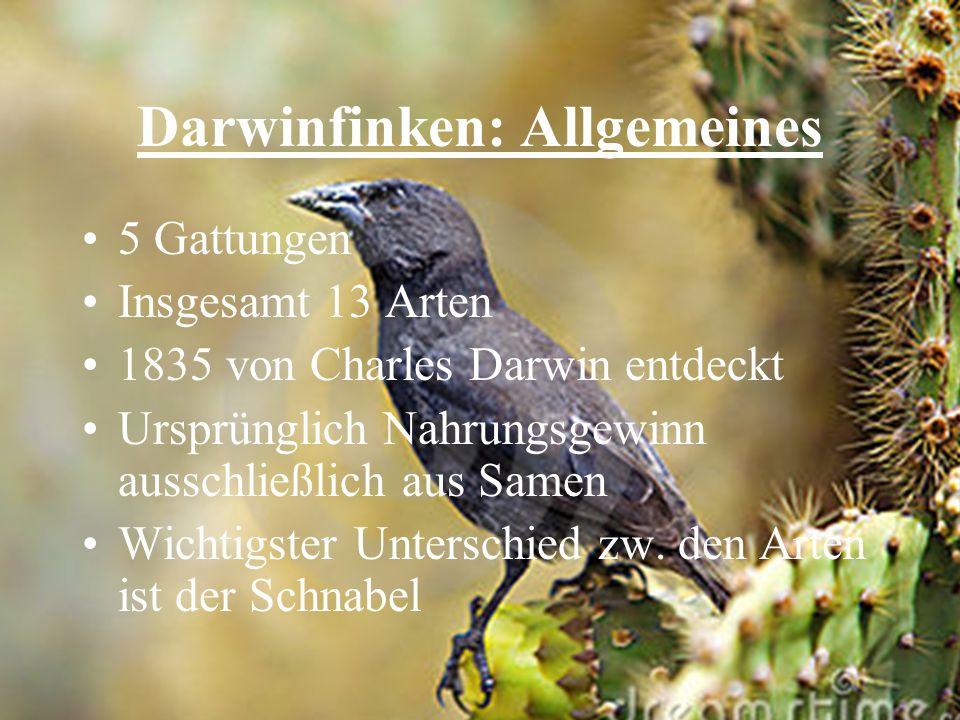 Darwinfinken: Allgemeines