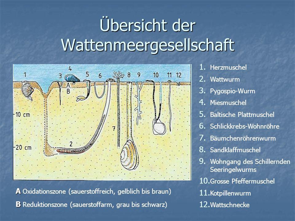 Übersicht der Wattenmeergesellschaft
