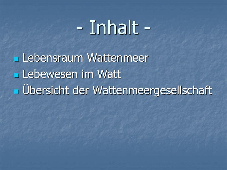 - Inhalt - Lebensraum Wattenmeer Lebewesen im Watt