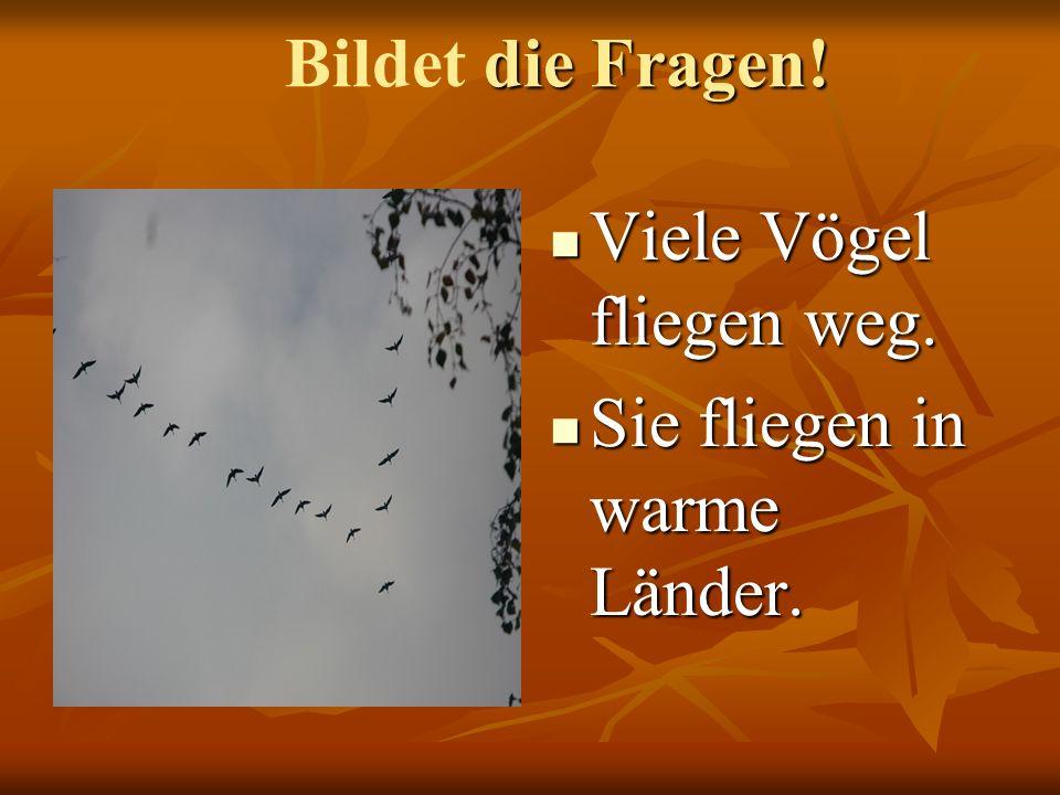 Bildet die Fragen! Viele Vögel fliegen weg. Sie fliegen in warme Länder.