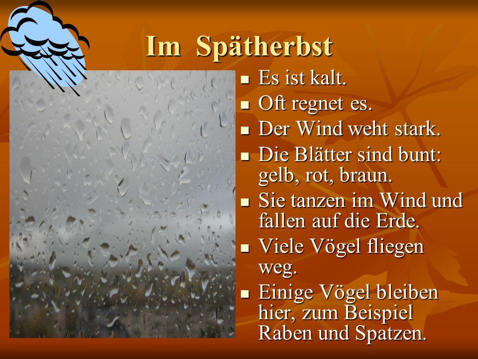 Im Spätherbst Es ist kalt. Oft regnet es. Der Wind weht stark.
