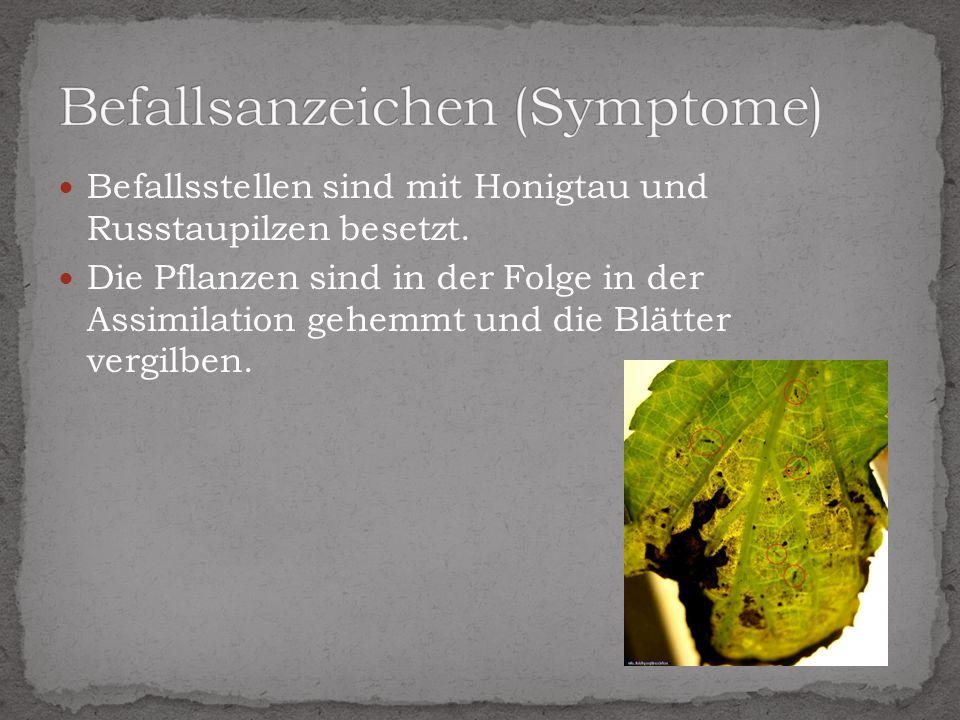 Befallsanzeichen (Symptome)