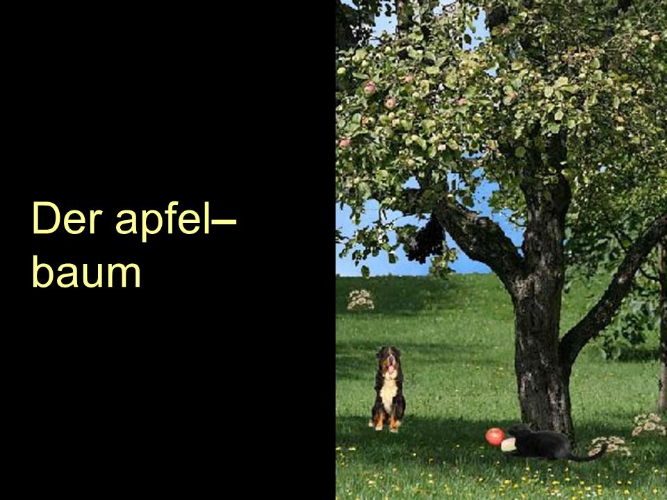 Der apfel–baum
