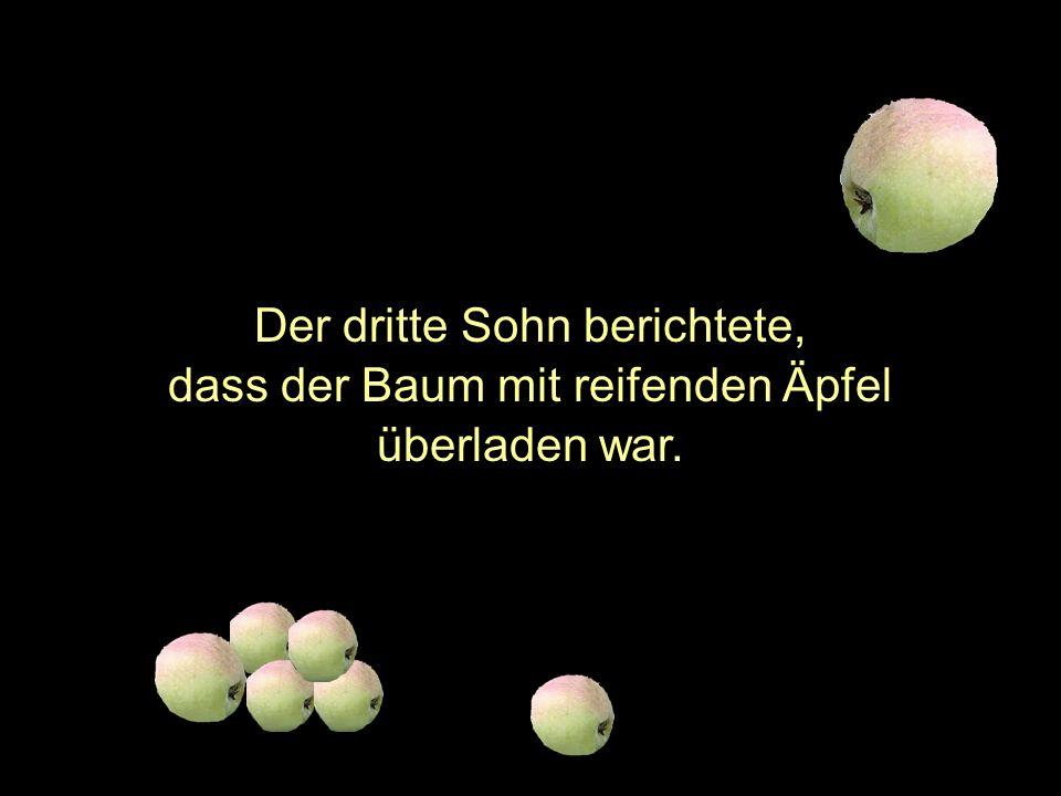 Der dritte Sohn berichtete, dass der Baum mit reifenden Äpfel