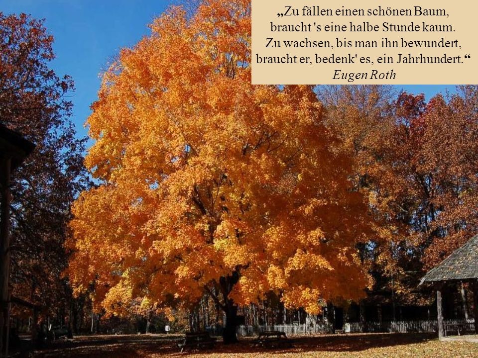 """""""Zu fällen einen schönen Baum, braucht s eine halbe Stunde kaum."""