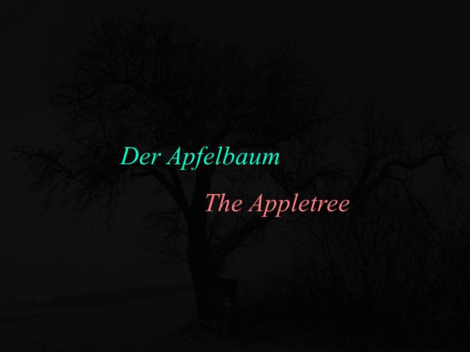 Der Apfelbaum The Appletree