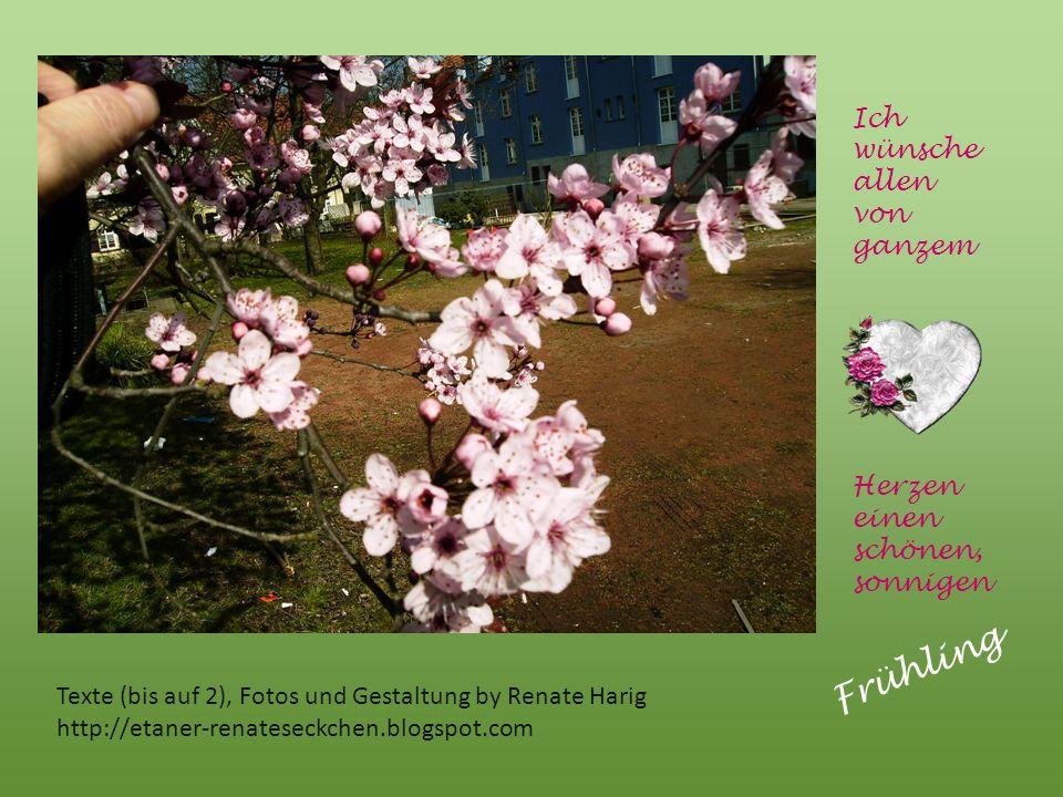 Frühling Ich wünsche allen von ganzem Herzen einen schönen, sonnigen