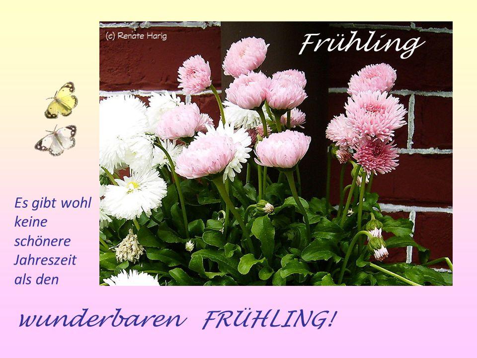 Frühling wunderbaren FRÜHLING! Es gibt wohl keine schönere Jahreszeit