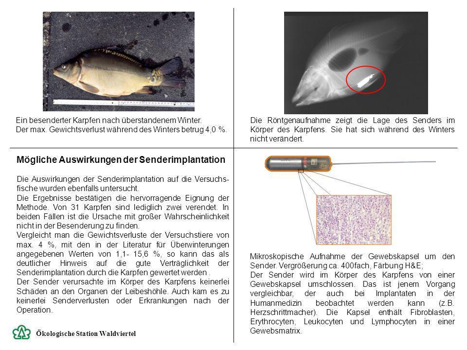 Mögliche Auswirkungen der Senderimplantation