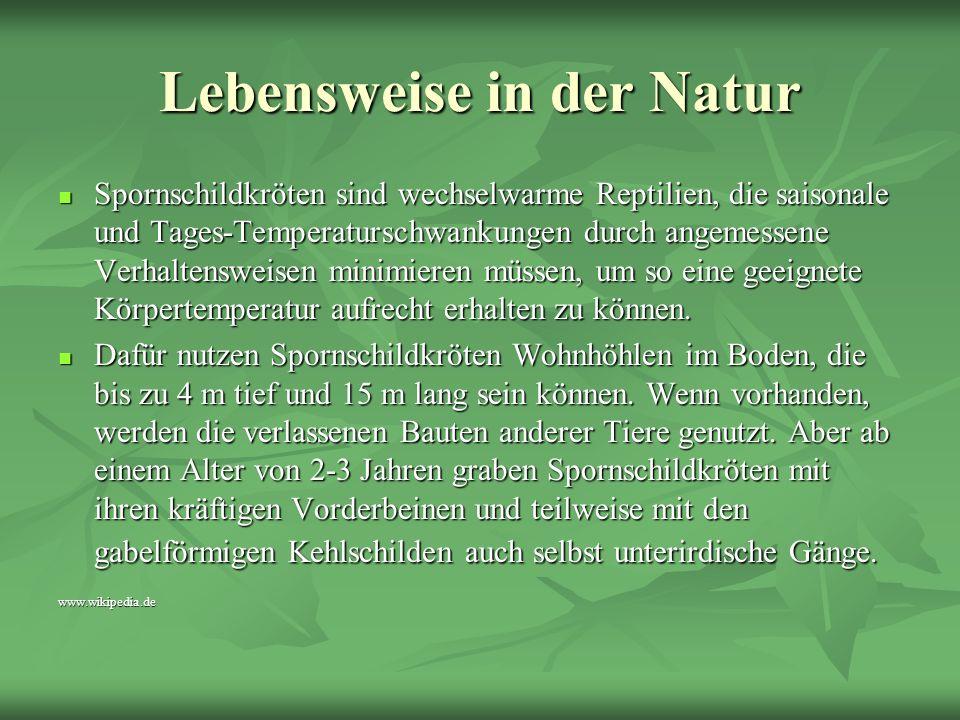 Lebensweise in der Natur