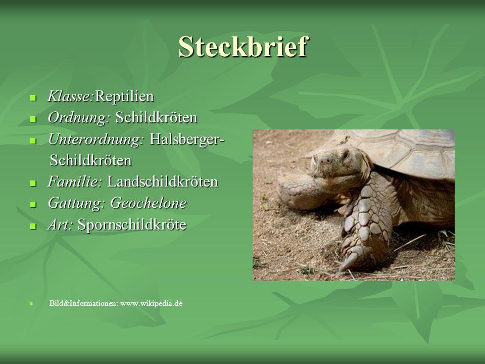 Steckbrief Klasse:Reptilien Ordnung: Schildkröten