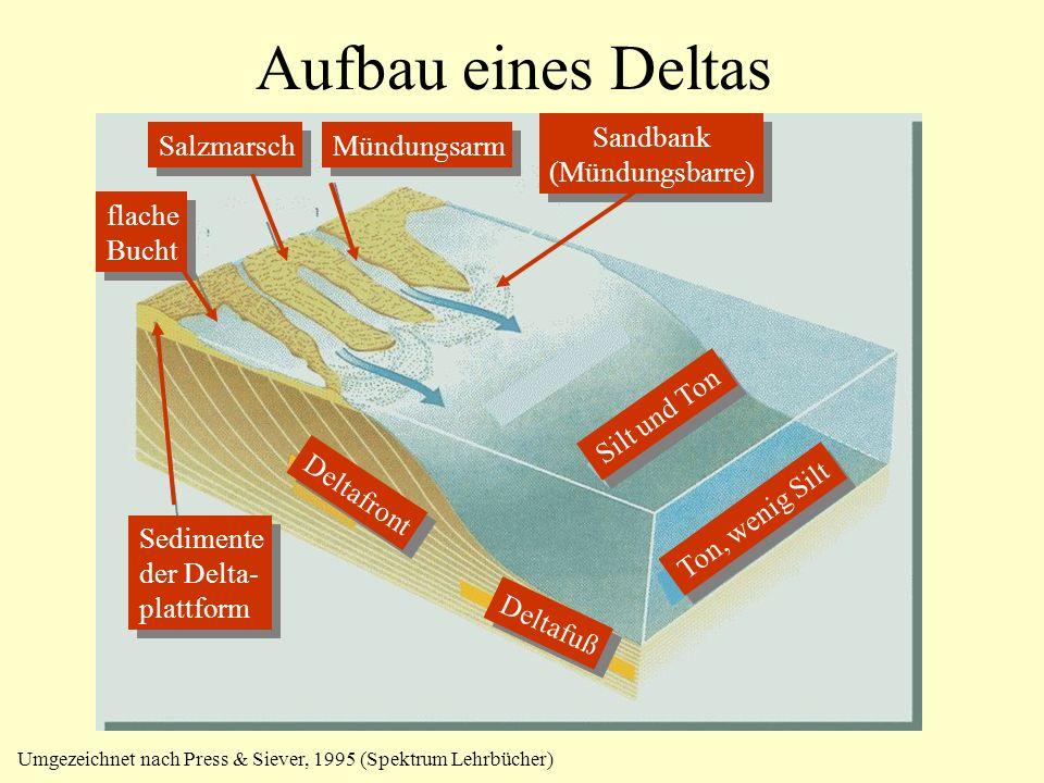 Aufbau eines Deltas Sandbank (Mündungsbarre) Salzmarsch Mündungsarm