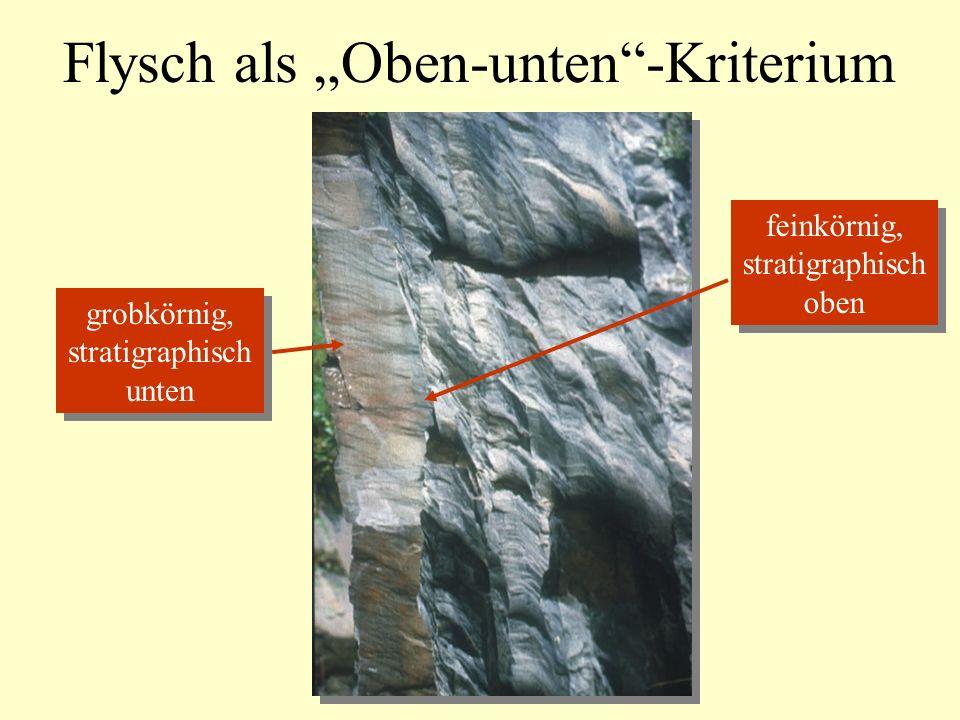 """Flysch als """"Oben-unten -Kriterium"""