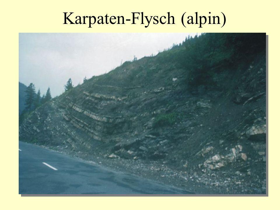 Karpaten-Flysch (alpin)