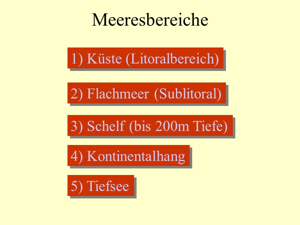 Meeresbereiche 1) Küste (Litoralbereich) 2) Flachmeer (Sublitoral)