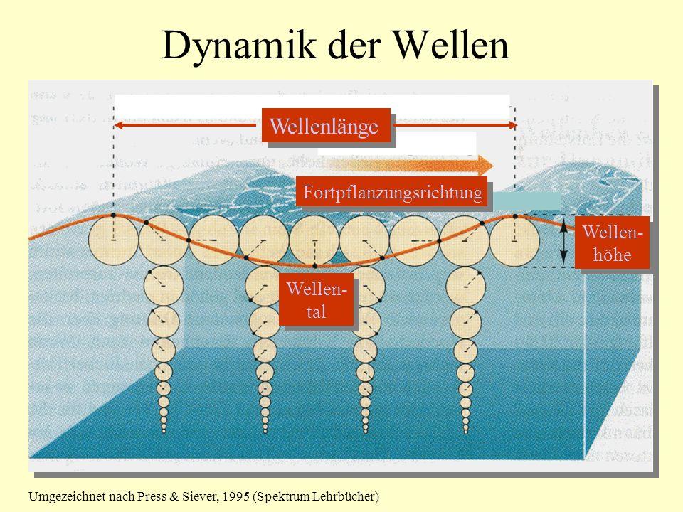 Dynamik der Wellen Wellenlänge Fortpflanzungsrichtung Wellen- höhe