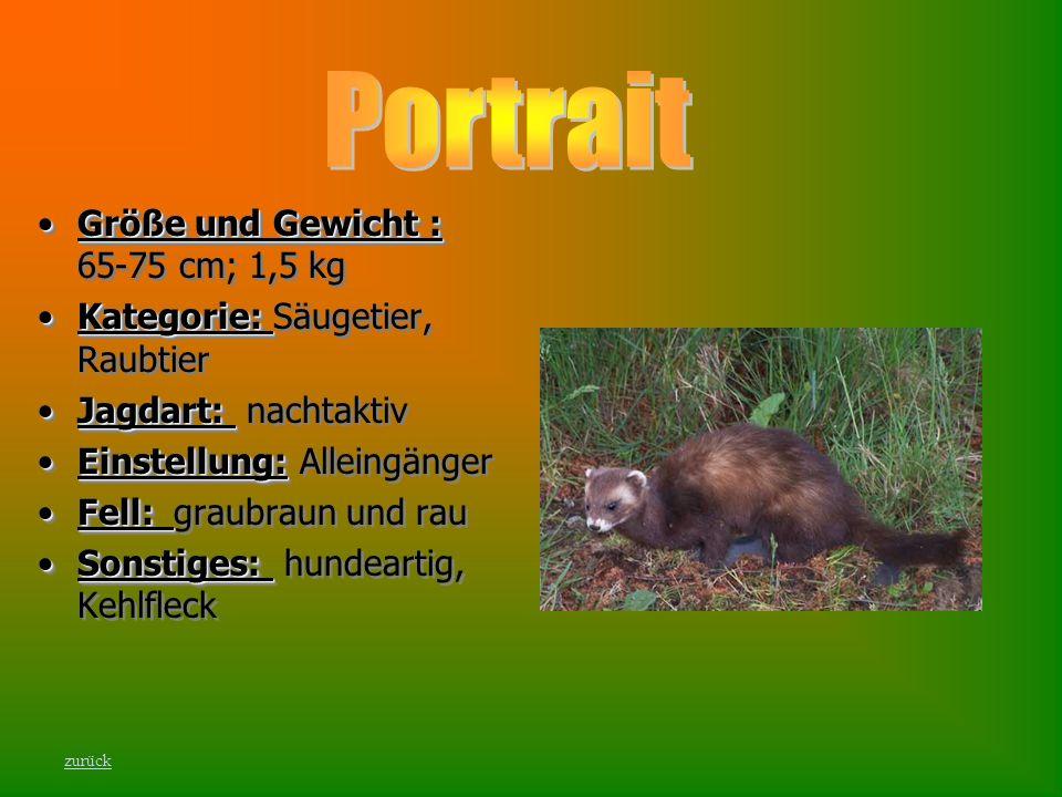 Portrait Größe und Gewicht : 65-75 cm; 1,5 kg