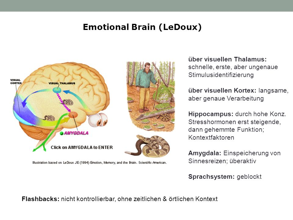 Emotional Brain (LeDoux)