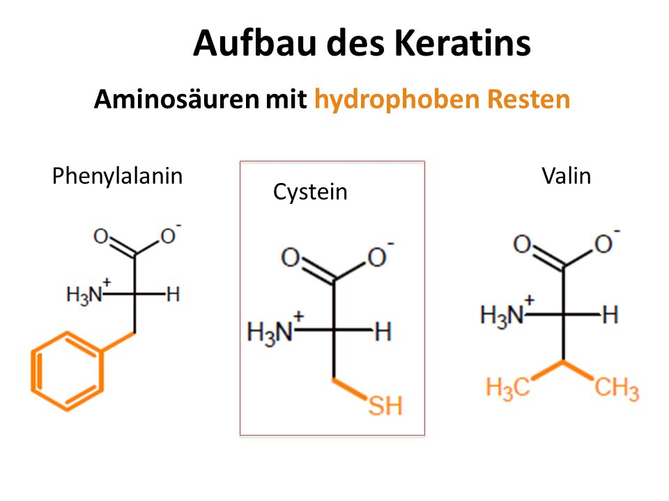 Aufbau des Keratins Aminosäuren mit hydrophoben Resten Phenylalanin
