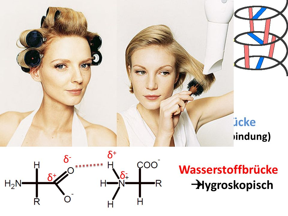 Salzbrücke (Ionenbindung) δ+ δ- Wasserstoffbrücke Hygroskopisch δ- δ+