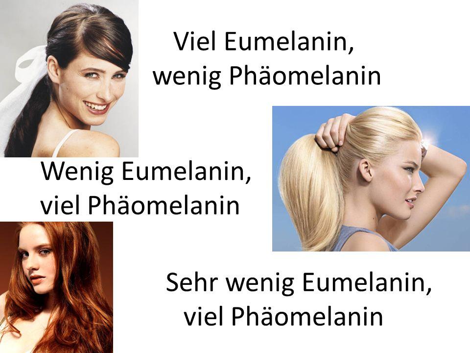 Viel Eumelanin, wenig Phäomelanin. Wenig Eumelanin, viel Phäomelanin.