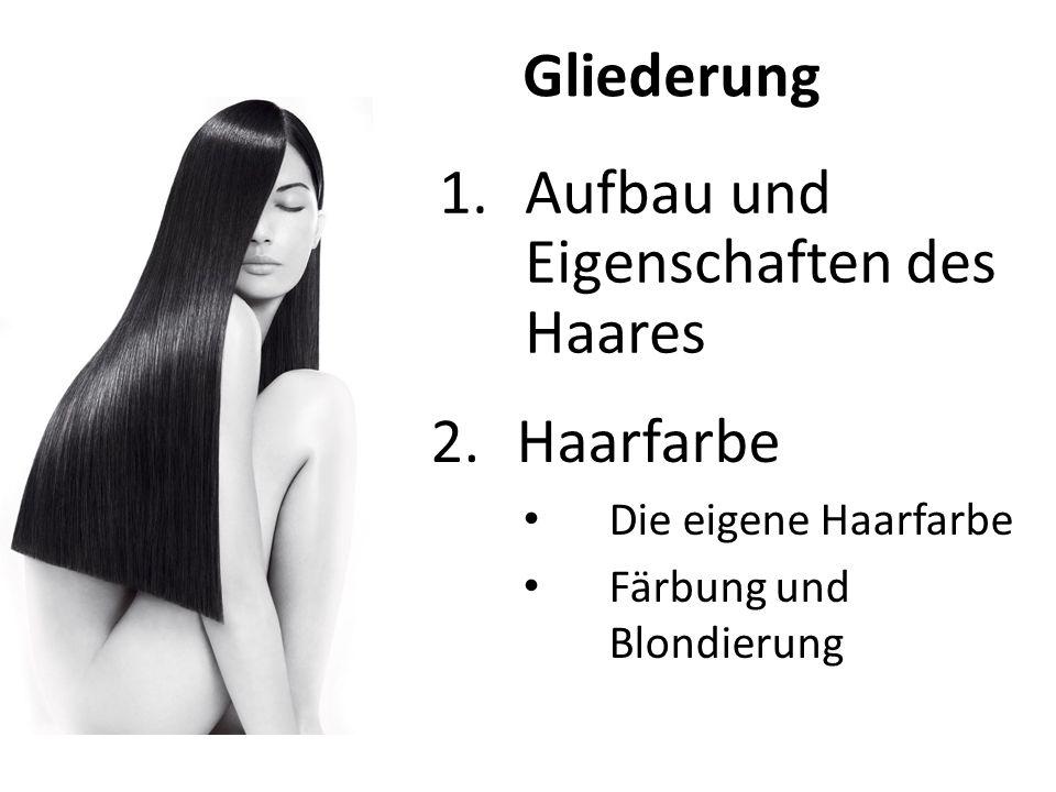 Aufbau und Eigenschaften des Haares
